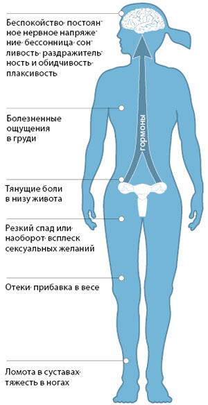 Эндометрий перед месячными фото